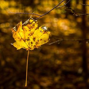 2013-11-03_Thornhill_Woods_Park_14
