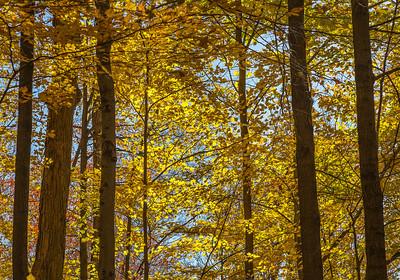 2013-11-03_Thornhill_Woods_Park_18