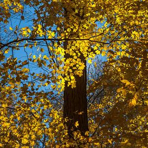2013-11-03_Thornhill_Woods_Park_19