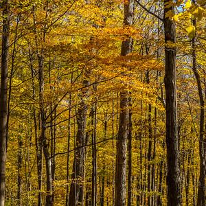 2013-11-03_Thornhill_Woods_Park_06