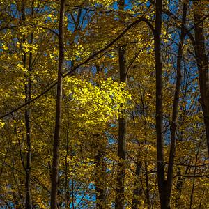 2013-11-03_Thornhill_Woods_Park_11