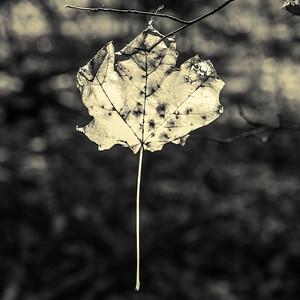 2013-11-03_Thornhill_Woods_Park_15