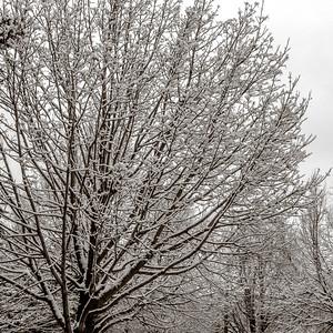 2013-11-27_First_Snow_3