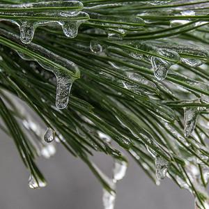 2013-12-24_Ice_Storm_02
