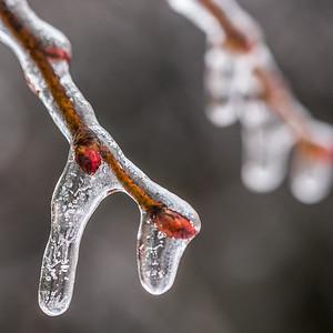 2013-12-24_Ice_Storm_18