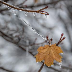 2013-12-24_Ice_Storm_04