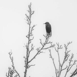 2013-12-24_Ice_Storm_01