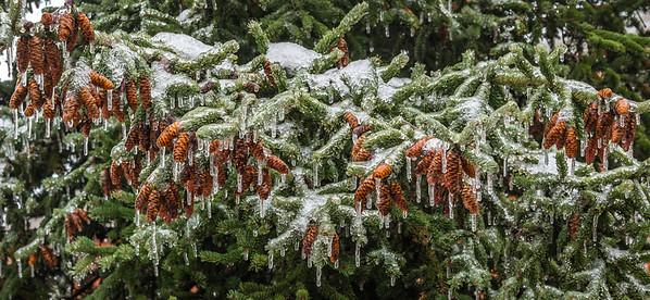 2013-12-24_Ice_Storm_15