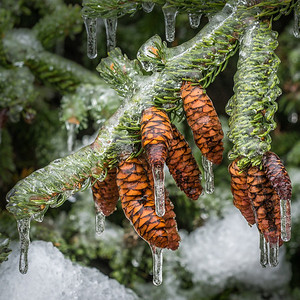 2013-12-24_Ice_Storm_13