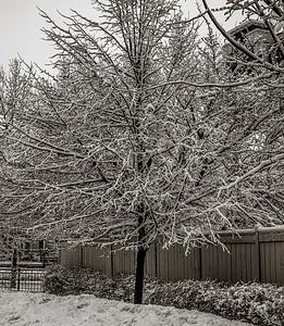 2014-02-02_Snowstorm_08