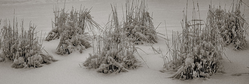 2014-02-02_Snowstorm_26