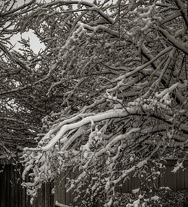 2014-02-02_Snowstorm_11