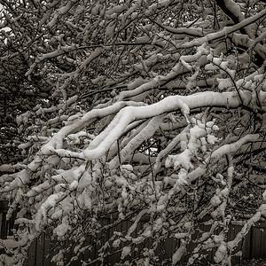 2014-02-02_Snowstorm_10