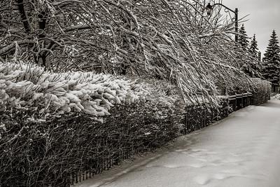 2014-02-02_Snowstorm_17