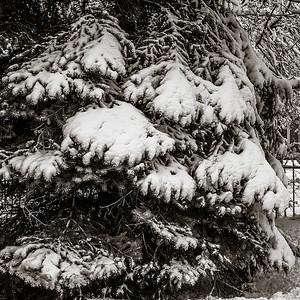 2014-02-02_Snowstorm_02