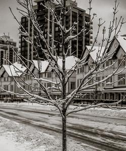 2014-02-02_Snowstorm_19