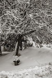 2014-02-02_Snowstorm_06