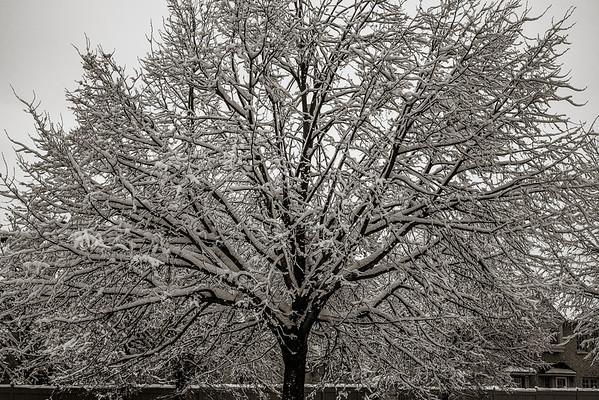 2014-02-02_Snowstorm
