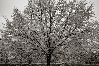 2014-02-02_Snowstorm_03