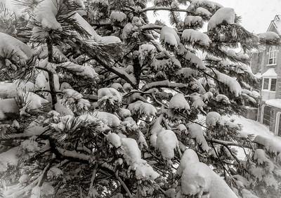 2014-02-05_Snowstorm_28