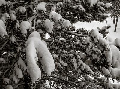 2014-02-05_Snowstorm_05
