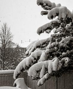 2014-02-05_Snowstorm_04