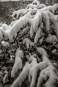 2014-02-05_Snowstorm_10