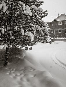 2014-02-05_Snowstorm_13