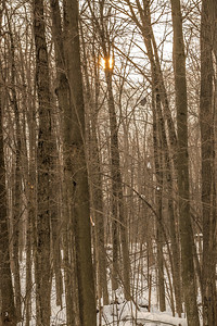 2014-02-14_Thornhill_Woods_Park_1