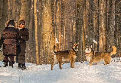 2014-02-14_Thornhill_Woods_Park_3