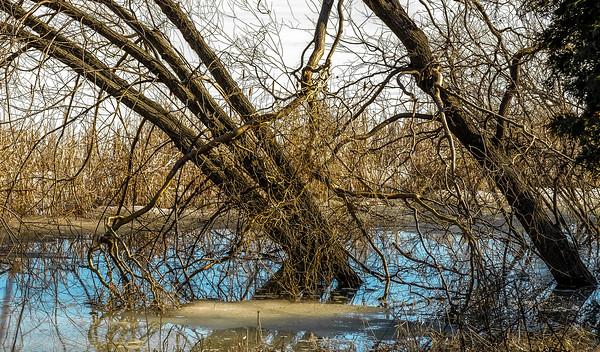 2014-04-02_Sagescrest_Pond_19
