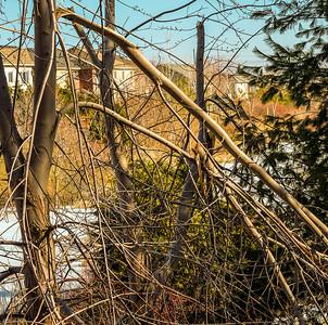 2014-04-02_Sagescrest_Pond_16