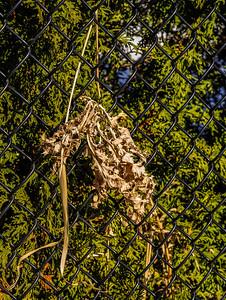 2014-04-02_Sagescrest_Pond_09