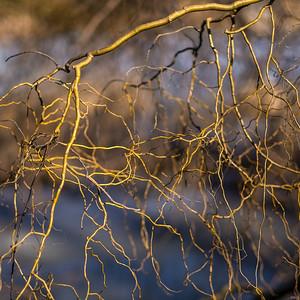2014-04-02_Sagescrest_Pond_22