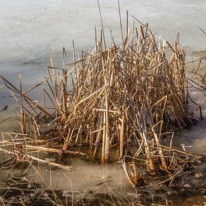 2014-04-02_Sagescrest_Pond_01