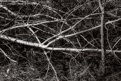 2014-04-08_Pomona_Park_27