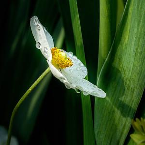 2014-05-27_Edward_Gardens_20