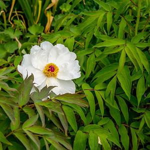 2014-05-27_Edward_Gardens_36