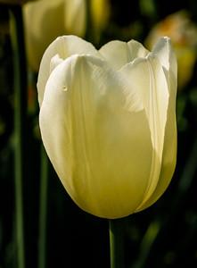 2014-05-27_Edward_Gardens_22