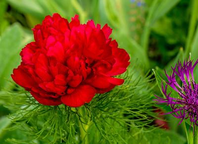 2014-05-27_Edward_Gardens_37