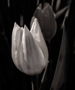2014-05-27_Edward_Gardens_23