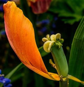 2014-05-27_Edward_Gardens_29
