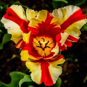 2014-05-27_Edward_Gardens_11