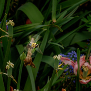 2014-05-27_Edward_Gardens_24