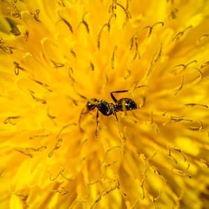 2014-05-27_Edward_Gardens_01