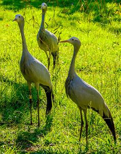 2014-05-09_SA_Birds_07