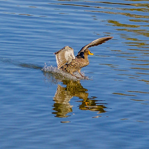 2014-05-09_SA_Birds_In_Motion_20