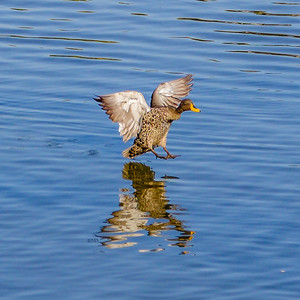 2014-05-09_SA_Birds_In_Motion_19
