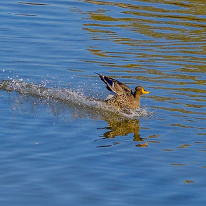 2014-05-09_SA_Birds_In_Motion_21