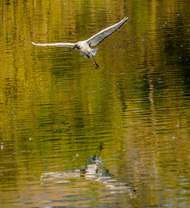 2014-05-09_SA_Birds_In_Motion_01